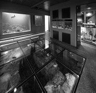 Aquarium Piran and underground archeology