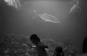 Aquarium Piran