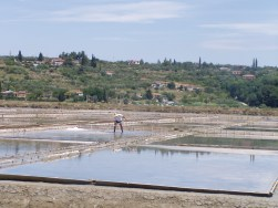 a salt harvester at work in the saltpans of Sečovlje